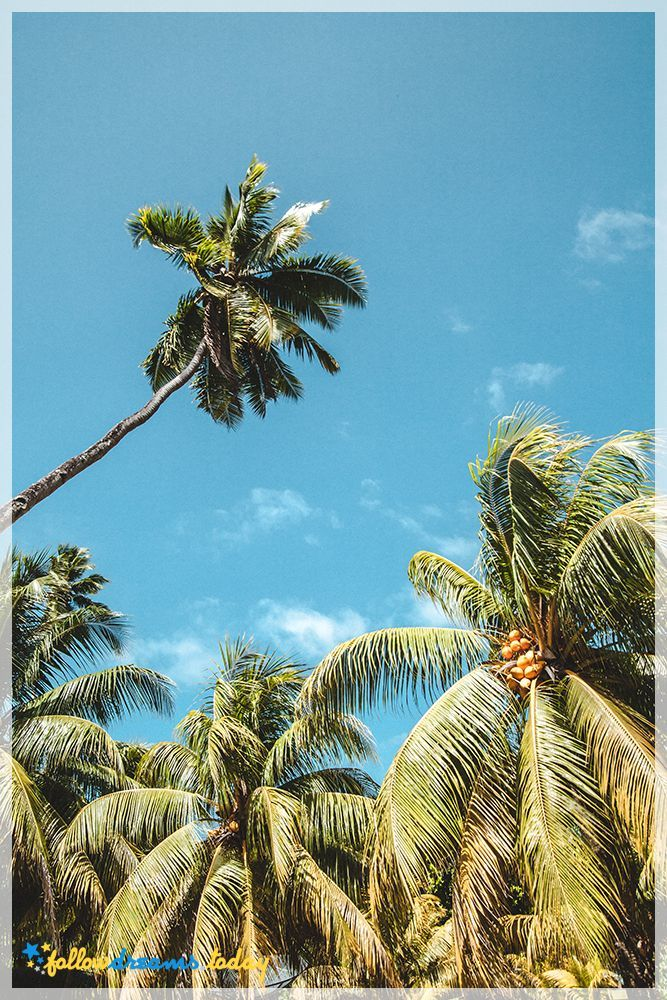 Bright sun shining down on coconut palms in Seychelles